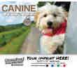 Canine Companions Wall Calendar 2017 - Stapled