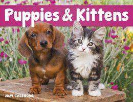 Puppies & Kittens Promotional Calendar 2018 Window
